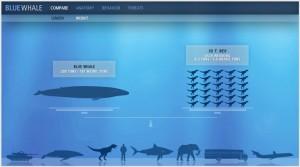 interactivewhalejpg